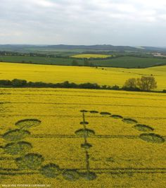 Crop Circle at Willoughby Hedge, Nr Mere, Wiltshire. Reported 4th May  2017