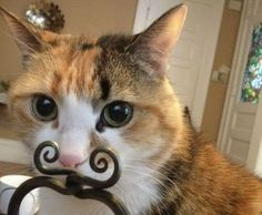 It's a catstache