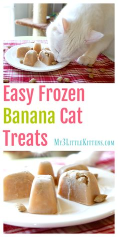 Buda Dla Psa Dog House These Easy Frozen Banana Cat Treats are perfect for every kitty! Plus you can got wrong with homemade!Buda Dla Psa Dog House These Easy Frozen Banana Cat Treats are perfect for every kitty! Plus you can got wrong with homemade!