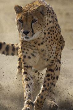 """wonderous-world: """"Brakes! by San Diego Zoo Global """""""