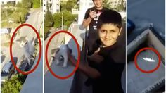 Heartless Lebanese teens throw innocent cat from rooftop for fun! Act Now! | YouSignAnimals.org