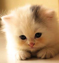 i wanna pet this cat