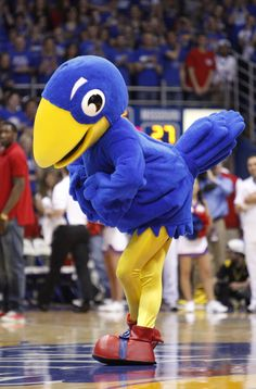 This was a genius move for KU! Love that they are bringing back the 1912 jayhawk as it turns 100!  Shows the history of KU and my FAVORITE jayhawk (especially since I worked at University Floral!)     Centennial Jayhawk | 1912