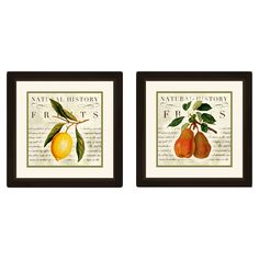 PTM Images Natural History Fruits 2 Piece Framed Graphic Art & Reviews | Wayfair