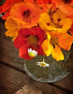 Three Dogs in a Garden: nasturtiums in a glass bowl