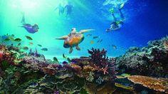 10 lugares lindos no mundo para fazer snorkel - Dicas de viagem