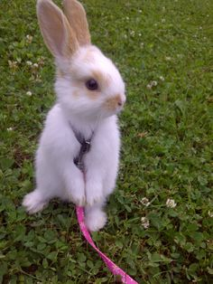cute bunny pictures, this one is called: bunny on a leash Cute Bunny Pictures, Funny Animal Pictures, Funny Animal Videos, Funny Photos, Cute Little Animals, Cute Funny Animals, Cute Dogs, Fluffy Animals, Animals And Pets