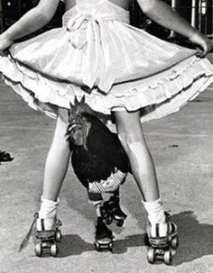 Buster, a roller skating rooster, navigates Cathy Henderson's legs. Photo publshed in the Times. Oct. 12, 1952. Photo by Leigh Wiener.