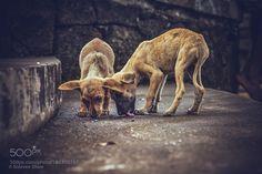 Stop Animal Cruelty by steevenshaw #animals #animal #pet #pets #animales #animallovers #photooftheday #amazing #picoftheday