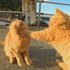 What did you call me? - your daily dose of funny cats - cute kittens - pet memes - pets in clothes - kitty breeds - sweet animal pictures - perfect photos for cat moms Cute Funny Animals, Funny Cats, Animals And Pets, Baby Animals, Animals Images, Animal Pictures, Photo Chat, Cat Aesthetic, Cute Creatures