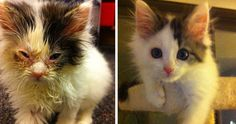 16 Totally Heartwarming Before-and-After Photos of Rescued Cats cute kittens for adoption - Kittens Cute Kittens, Cats And Kittens, Animals And Pets, Cute Animals, Stuart Little, Kitten Rescue, Faith In Humanity, Cat Life, Animal Rescue