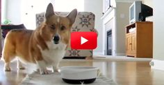I Couldn't Stop Laughing During This Video! How Adorable Is This Dog?! | The Animal Rescue Site Blog