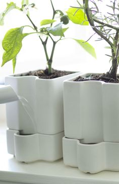No neighbor needed! These SOTCITRON self-watering pots have a built-in reservoir to keep your plants happy even if you're away for a few days.