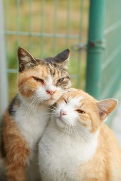 """* * """" It dont's matter if I iz from de other side of de tracks. Weez be stayin' togethers."""""""