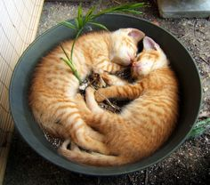 Cats in a planter