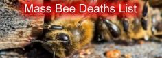 Worldwide Bee Die offs