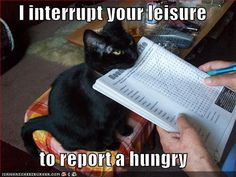 Cat is hungry-LOL
