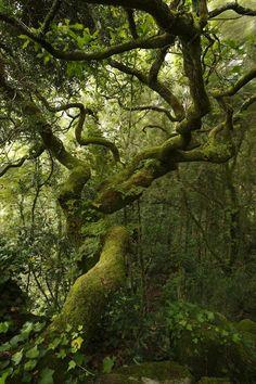 "spiritofthewoodlands: "" Ode to a ~ Mystical Forest ~  tree in the wind by Ricardo Alves da Silva """