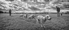 Greyhound motion capture - Hot Dog Photography