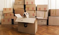 Looking for some quick packing tips? Check out these 20 quick tips on how to pack for your move.