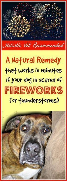 What to do if your Dog is Scared of Fireworks (or thunderstorms) A Natural Remedy that is Holistic Vet Recommended | Primally Inspired