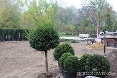 Ogród z lustrem - strona 4 - Forum ogrodnicze - Ogrodowisko