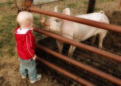 Jíme maso. Asi to nemá logiku. Náhodou jsem narazil na jedno video o marketingu potravin. Jak milujeme maso, na druhou stranu, jak milujeme zvířátka. Pes není zvíře ani věc. Snad podle nových zákonů. Prase není věc, za chvíli také bude. Kráva, ovce, slepice. Skončíme u sojového masa.