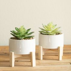 Mistana 2 Piece Succulent Plant in Pot Set Base Colour: White Artificial Succulents, Faux Succulents, Planting Succulents, Succulent Planters, Fake Plants Decor, Faux Plants, Plant Decor, Real Plants, Metal Wall Planters