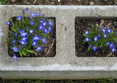 Cement block garden edging.