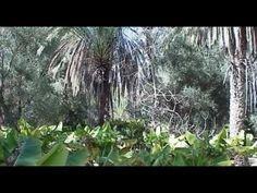 2000 Year Old Food Forest Feeds 800 Farmers (Video)