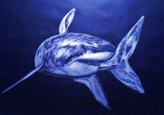 Dibujo a lápiz blanco sobre papel de color ejemplo de tiburón. 50 x 70 cms