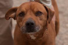 You can't say no to that face.  #dog #beltramihumanesociety #cutie #bringmehome #bemidji