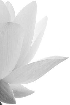 New Wallpaper Iphone Photography Shades Ideas New Wallpaper Iphone, Trendy Wallpaper, Lotus Wallpaper, Aesthetic Colors, White Aesthetic, Iphone Photography, White Photography, Pinterest Color, Shades Of White