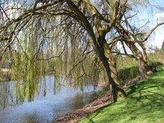 The Willows at Brackett's Landing Park in Bothell