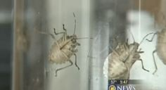 Tired of Stinkbugs? Here's the SECRET to getting rid of them! | WRWD Morning Show on Country 107.3, 106.9, 99.3, 1230 AM WRWD