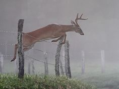 Jumping in the early morning fog by asparks306 on Flickr.