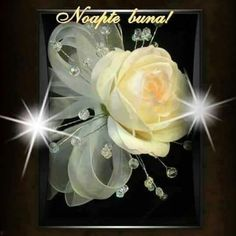 Noapte de vis Good Night, Facebook, Floral, Cook, Italia, Pictures, Nighty Night, Flowers, Good Night Wishes