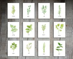 Herbs Art Print Set of 12 Prints. This set of 12 8x10 prints features original illustrations painted in watercolor by Stephanie Hathaway. Please note that colors may differ slightly from what you see on your screen. This piece is printed on heavy stock, acid free watercolor paper. Just know that lots of love and care has gone into the design and production of these prints. This set of prints includes: cilantro, chives, marjoram, mint, oregano, parsley, rosemary, sage, tarragon, thyme…