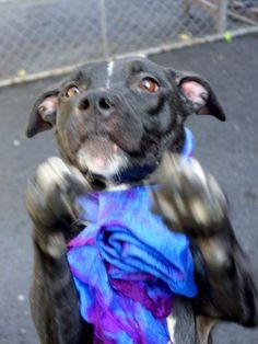TO BE DESTROYED - FRIDAY - 03/28/14, URGENT - Manhattan Center    LADY G - A0994237   Main thread: https://www.facebook.com/photo.php?fbid=774608669218681&set=a.617938651552351.1073741868.152876678058553&type=3&permPage=1