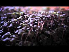 ▶ InFarm - The Next (R)Evolution In Urban Farming - YouTube