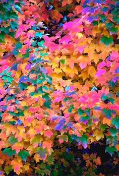 Such Colorful Leaves! World Of Color, Color Of Life, Beautiful Flowers, Beautiful Pictures, Illustration, Jolie Photo, Over The Rainbow, Pics Art, Amazing Nature