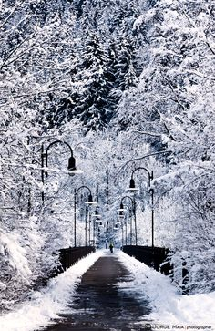 "I don't know what it is with me, but i love pictures of long roads lined with trees/lamp posts...i guess it has a romantic feel.  500px / Photo ""Snowy bridge"" by Jorge Maia"