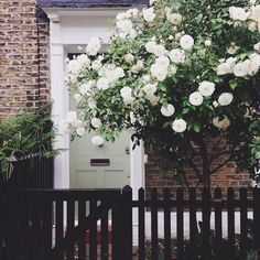 Beautiful coloured door with gorgeous white flowered tree outside from How To Choose The Perfect Front Door Colour For Red Brick Houses over on Modern Country Style