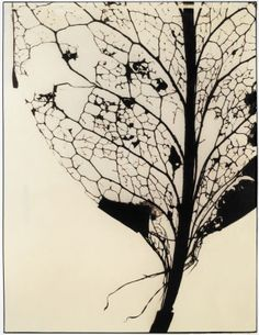 Delicate skeleton leaf patterns could work well with a marbled or subtle texture underneath? Leaf Skeleton, Natural Structures, A Level Art, Patterns In Nature, Leaf Patterns, Encaustic Art, Gcse Art, Leaf Art, Gravure