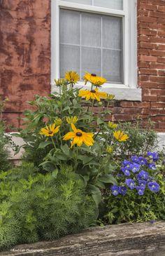 https://flic.kr/p/tNjxTx | Flower Garden | Beautiful little flower garden in downtown Oklahoma City