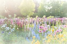 I love to grow pastel flowers of all varieties on my cottage grounds