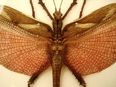 Giant insect by annamatic3000, via Flickr