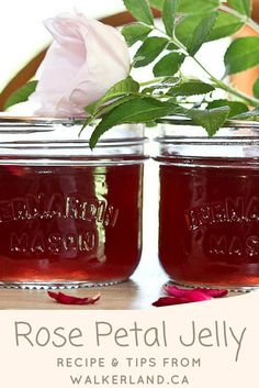 This Rose petal jelly is lightly floral & bright with fresh lemon. Recipe and tips included. Rose Petal Jelly Recipe, Rose Petal Jam, Rose Petals, Jelly Recipes, Jam Recipes, Canning Recipes, Party Recipes, Homemade Jelly, Jam And Jelly
