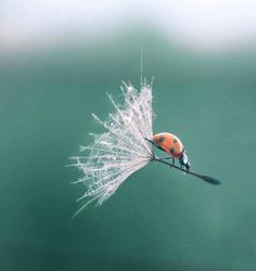 """how amazing is this shot? very... and I can hear the ladybug saying """"wwwwweeeeeeeeeeeeee"""""""