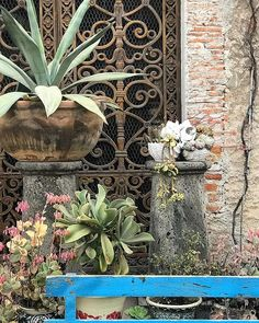 Beauty at every turn.  #sanmigueldeallenderetreat
